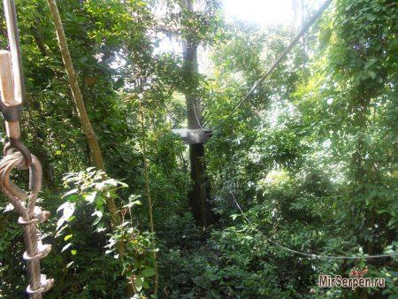 Flight of the Gibbon / Полет Гиббона: Прыжки по деревьям над джунглями