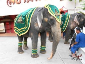 Бережное отношение к слонам в Таиланде