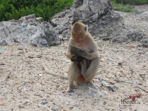 Остров обезьян, Паттайя, Таиланд