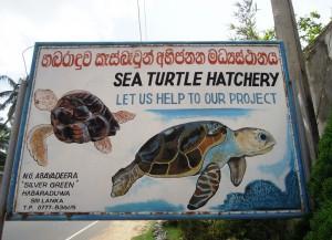 Живая Шри-Ланка: Черепаховые фермы