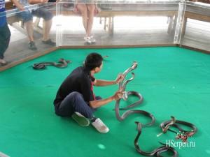 Тайская кухня: блюда из змей