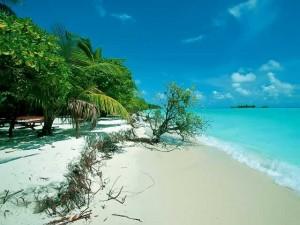 Почему отдыхать лучше на Мальдивах