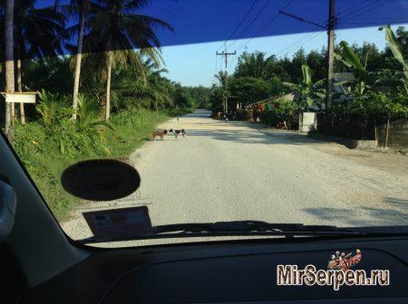 Тайские зверюшки - наглые и ленивые
