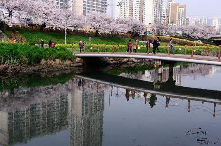 Блоги о Южной Корее