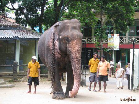 Топ-5 занятий во время отдыха на Шри-Ланке