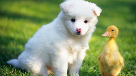 Можно ли есть корейскую собаку?