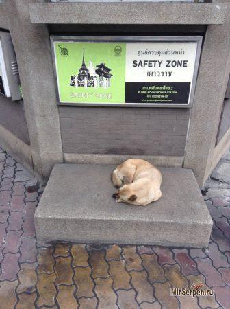 Про электронную любовь к собакам в Бангкоке