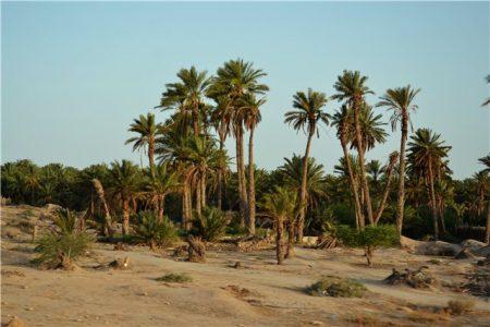 Тунис - путешествие в Сахару