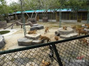 Охота на тигров в Sriracha Tiger Zoo