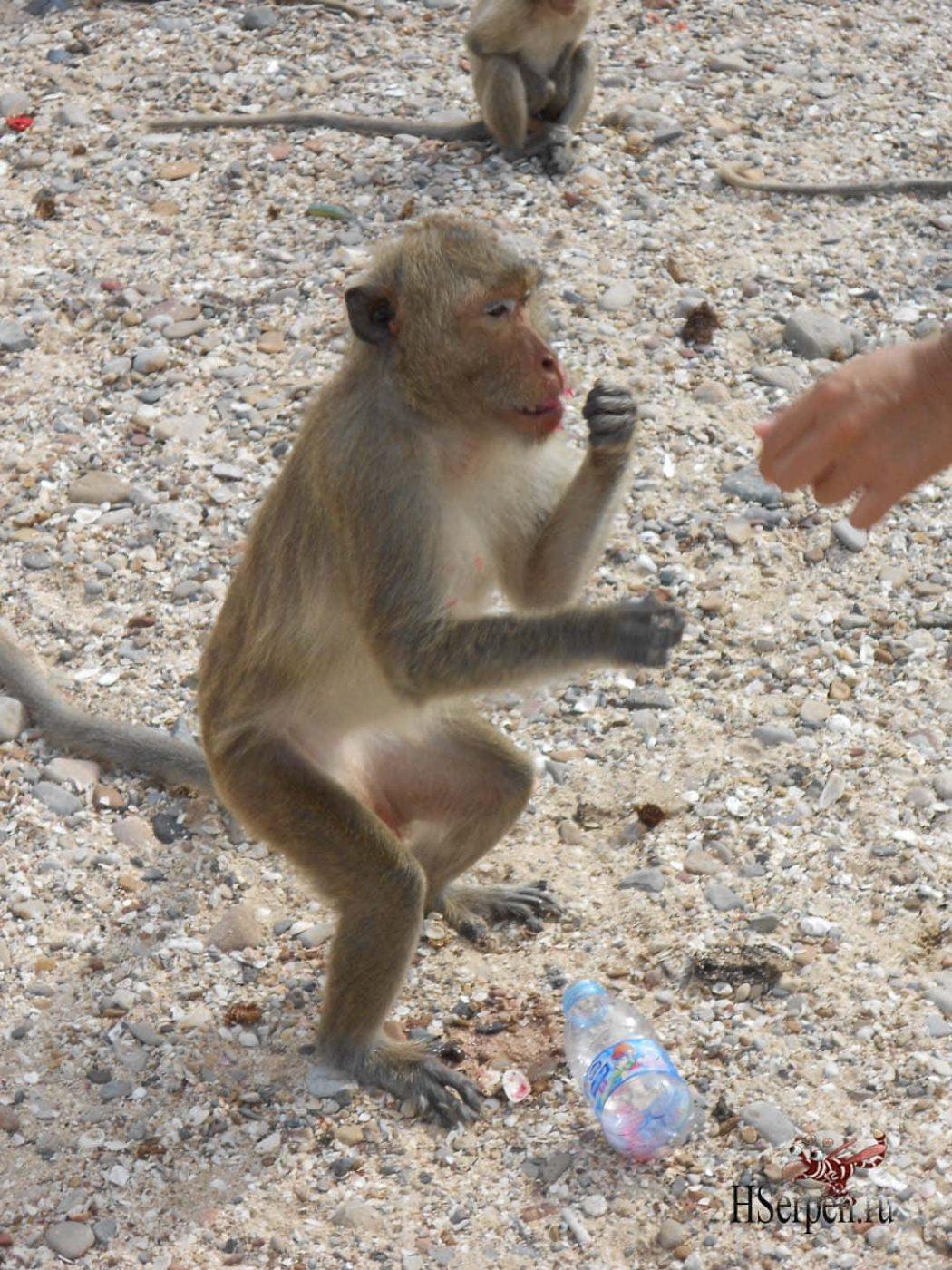 Истории острова обезьян, часть 1