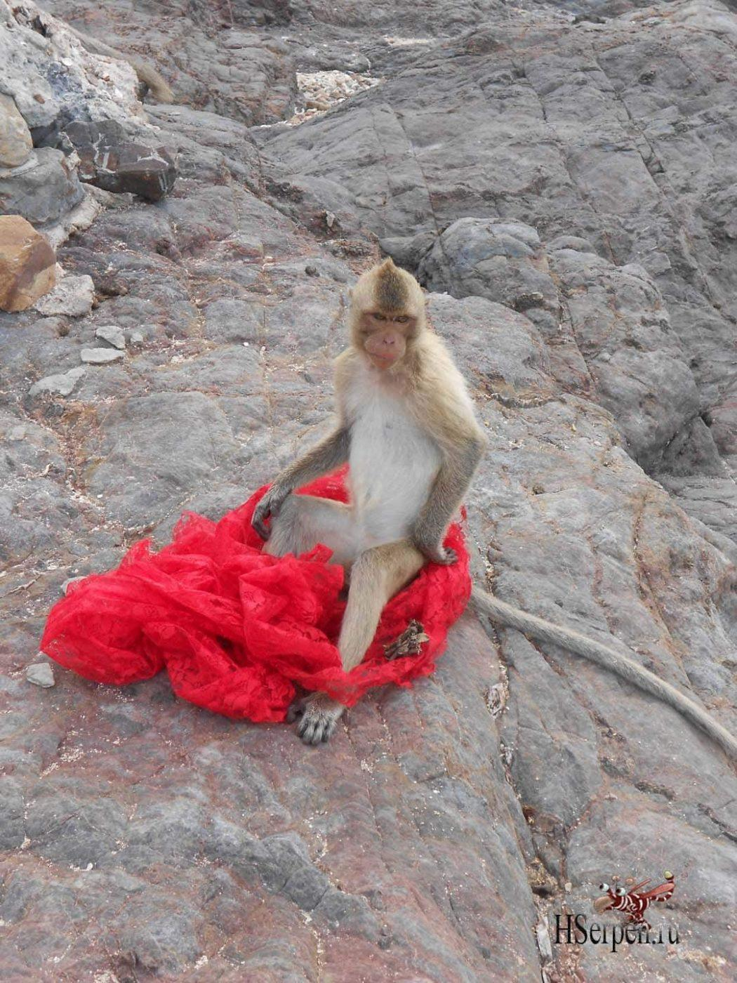Истории острова обезьян, часть 2