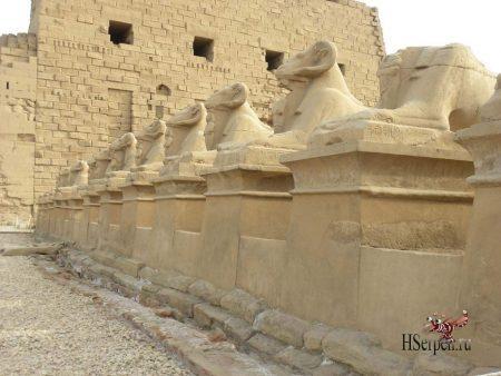 Дикая красота Египта