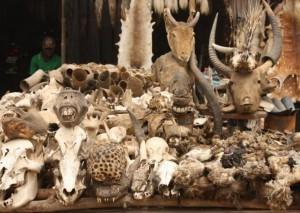 Магический рынок Акодессева, Того
