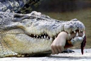 Остров крокодилов - остров Рамри