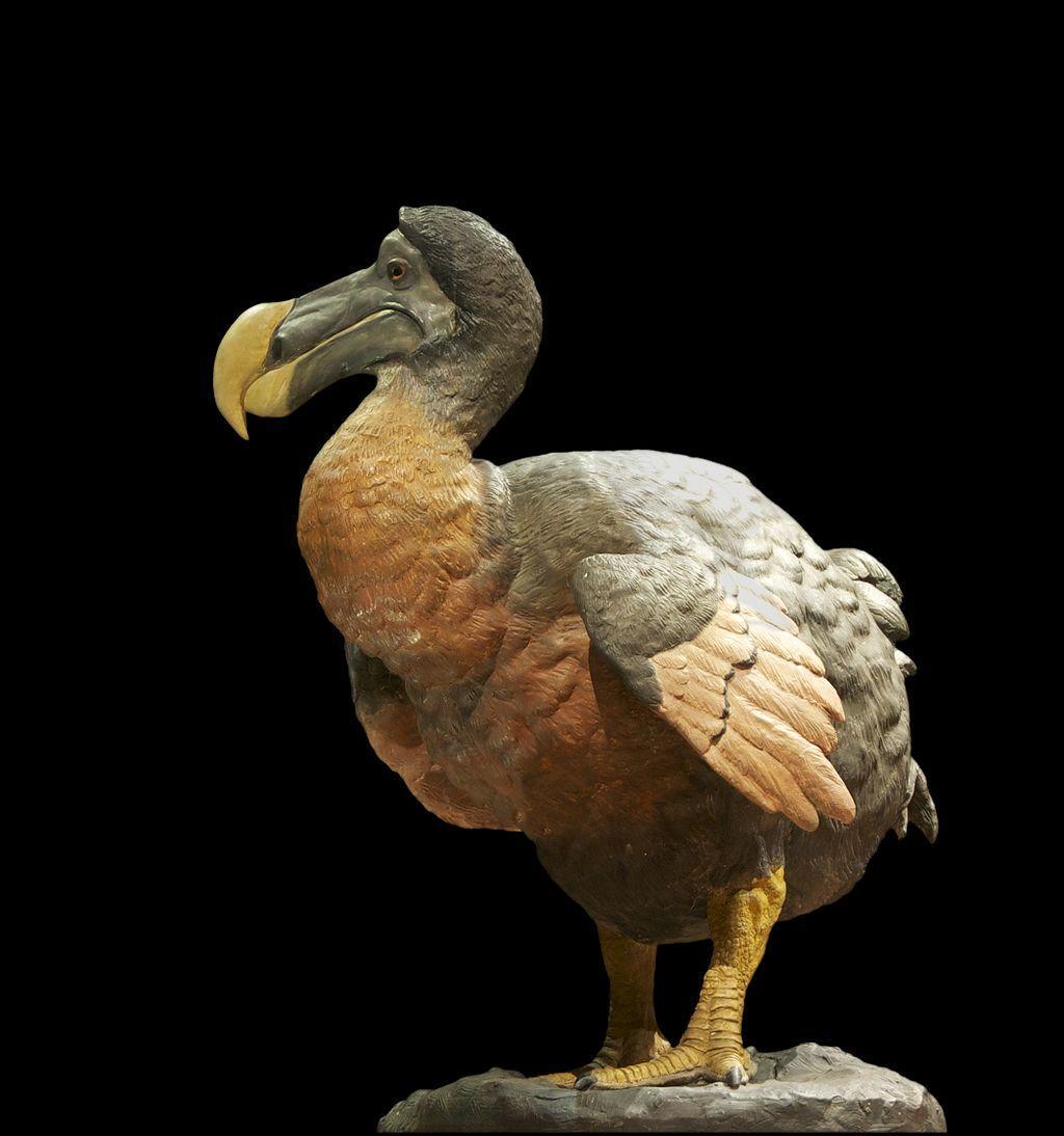 Священная птица острова Маврикий