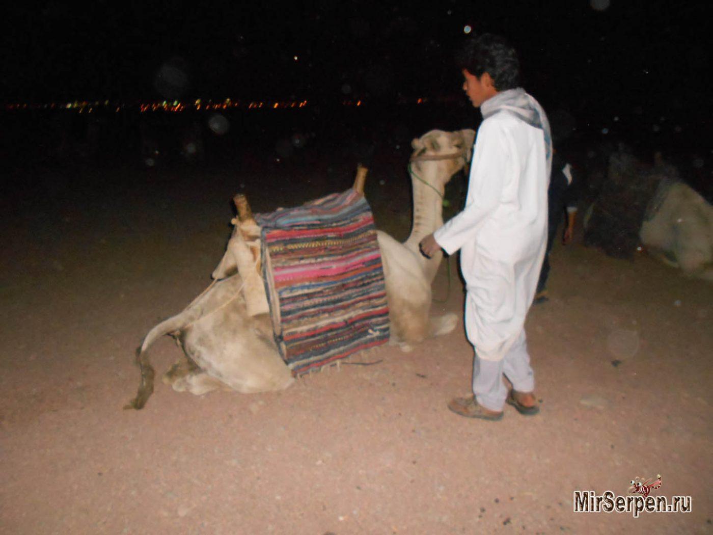 Катание на верблюде — ожидания и реальность