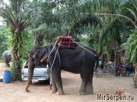 Катание на слонах - ожидания и реальность