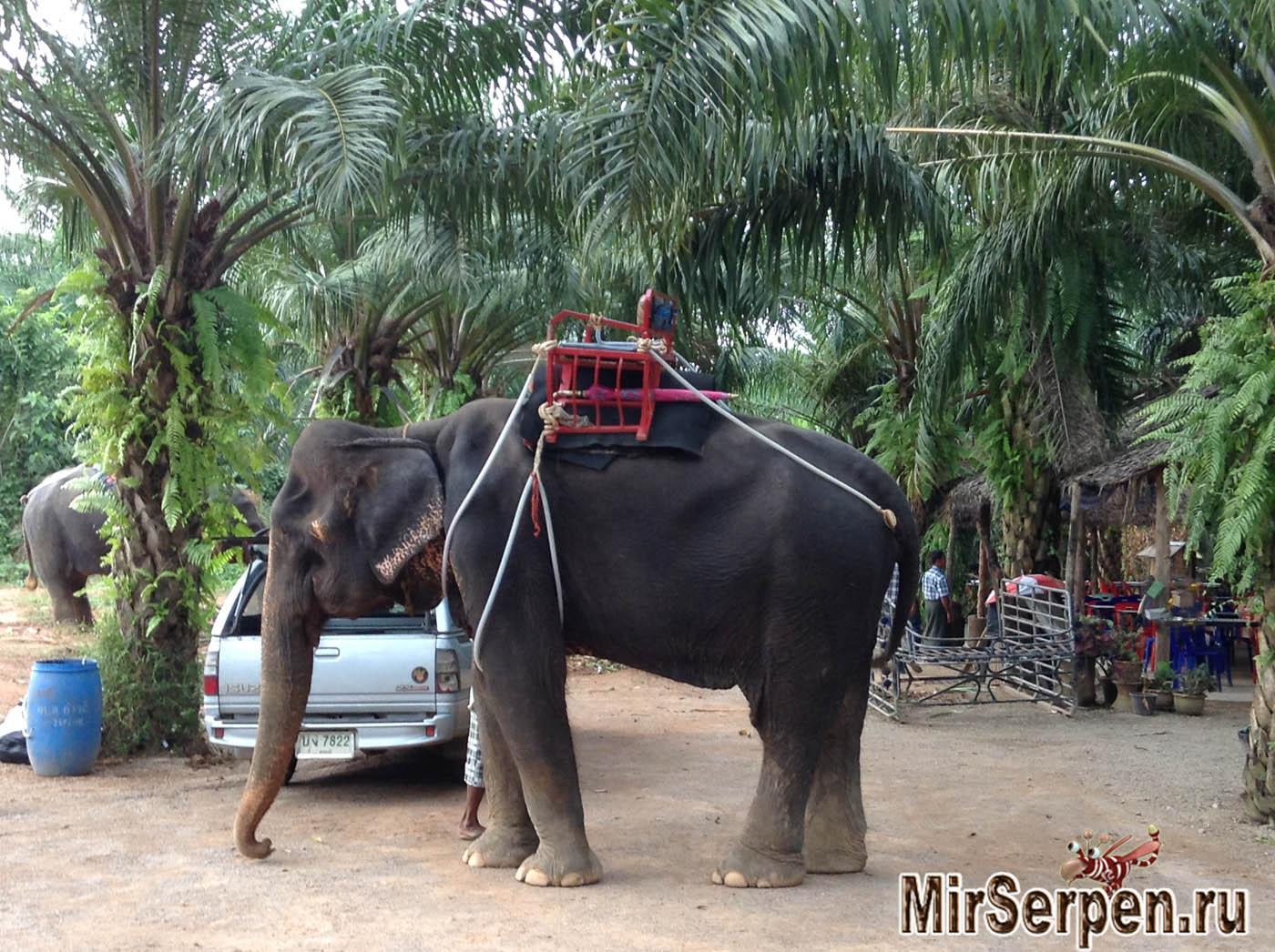 Катание на слонах — ожидания и реальность