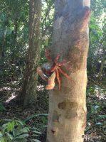 Фото дня: Древесный краб на острове Симилан, Таиланд