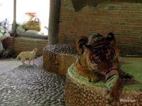 Фото дня: тигр и кошка в Паттайе, Таиланд