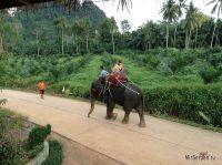 Неожиданное купание со слонами в Таиланде