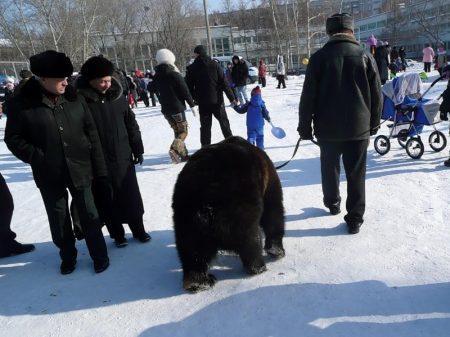 Тайские легенды о медведях в Москве