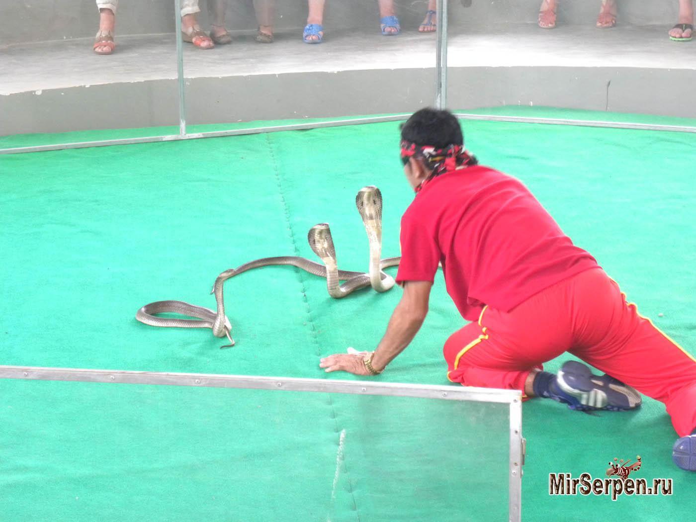 Шоу крокодилов и змей во Вьетнаме