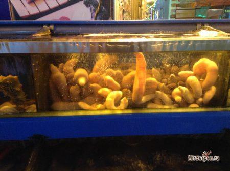 Рыба-пенис - южнокорейский деликатес