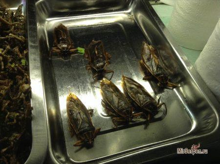 Тайские тараканы на кухне и в... тарелке