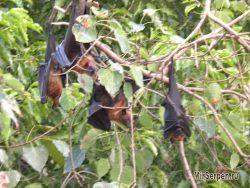Фото из Таиланда: селфи с летучими мышами